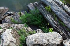 Il fiume oscilla il fondo fotografia stock