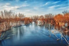 Il fiume passa in primavera per i cespugli Immagini Stock