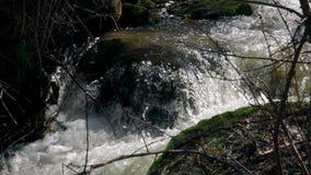 Il fiume scorre fra i cespugli stock footage