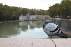Il fiume Tiber Fotografie Stock