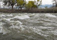 Il fiume Truckee, scolo della primavera Fotografie Stock