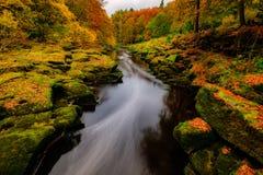 Il fiume Wharfe all'abbazia di Bolton, North Yorkshire immagini stock