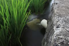 Il flusso di acqua di vita nei campi fotografia stock
