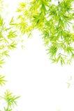 Il fogliame del bambù della vegetazione Fotografie Stock Libere da Diritti