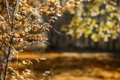 Il fogliame di autunno acceso con il sole Fotografia Stock Libera da Diritti