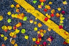 Il fogliame di caduta su asfalto scuro come foglie cade alla terra con la linea gialla Fotografia Stock