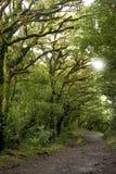 Il fogliame fertile e verde circonda le numerose tracce di escursione dentro nella foresta della nuvola di Monteverde in Costa Ri immagine stock libera da diritti