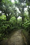 Il fogliame fertile e verde circonda le numerose tracce di escursione nella foresta della nuvola di Monteverde in Costa Rica fotografia stock libera da diritti