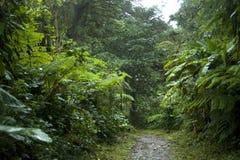 Il fogliame fertile e verde circonda le numerose tracce di escursione nella foresta della nuvola di Monteverde in Costa Rica fotografie stock libere da diritti