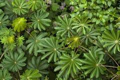 Il fogliame fertile e verde copre il pavimento della foresta in nuvola Forest Reserve di Monteverde in Costa Rica immagine stock libera da diritti