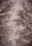 Il fondo è un vicolo dei rami dell'inverno Fotografia Stock Libera da Diritti