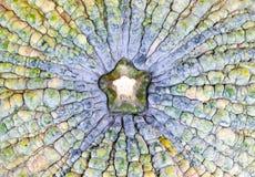 Il fondo è vista superiore della zucca Fotografia Stock