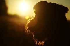 Il fondo astratto colora il cane della siluetta contro il tramonto di rosso arancio Fotografie Stock Libere da Diritti
