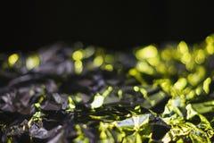 Il fondo astratto moderno della stagnola si è acceso dalla lampada verde variopinta Fotografia Stock