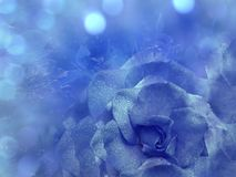 Il fondo blu floreale da è aumentato Fiorisce la composizione Un fiore di una rosa blu su un bokeh blu trasparente del fondo Prim fotografia stock libera da diritti