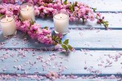 Il fondo con il rosa di sakura fiorisce e candele su woode blu Fotografia Stock
