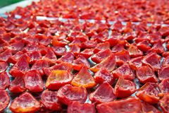 Il fondo dei pomodori rossi affetta l'essiccazione all'aperto alla luce solare Fotografie Stock Libere da Diritti