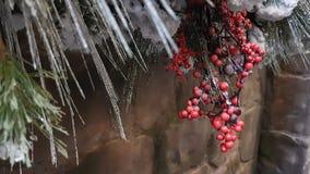 Il fondo della bacca rossa ed il pino coprono di foglie davanti al muro di mattoni Fotografie Stock