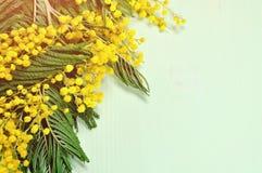 Il fondo della primavera con la mimosa si ramifica sulla superficie di legno verde chiaro Fotografia Stock