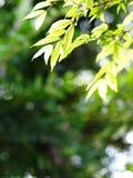 Il fondo della sfuocatura da varietà di pianta verde va immagine stock libera da diritti