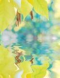 Il fondo di autunno con le foglie di giallo ha riflesso in un'acqua immagine stock libera da diritti