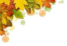 Il fondo di autunno con le foglie e la pittura secche macchia in un angolo Fotografie Stock Libere da Diritti