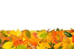 Il fondo di autunno con molti va Immagine Stock Libera da Diritti
