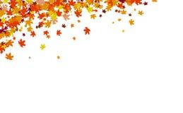Il fondo di autunno, il concetto di ringraziamento, foglie di acero sparge il mazzo nell'illustrazione di vettore della natura illustrazione vettoriale