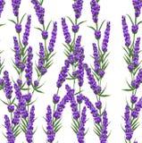 Il fondo di lavanda porpora fiorisce, fiori di stile dell'acquerello Fotografia Stock