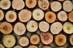 Il fondo di legno astratto di colore ha fatto di molti tronchi di albero tagliati fotografie stock