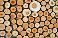 Il fondo di legno astratto di colore ha fatto di molti tronchi di albero tagliati fotografia stock libera da diritti