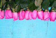 Il fondo di legno blu dell'acqua d'annata con la rosa di rosa germoglia Fotografia Stock