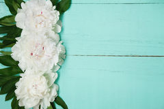 Il fondo di legno del turchese decorativo con le peonie bianche fiorisce Immagine Stock Libera da Diritti