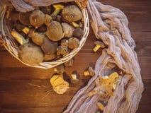 Il fondo di legno ed ha selezionato di recente il punto di vista superiore dei funghi polacchi dei funghi sul canestro di legno d immagini stock