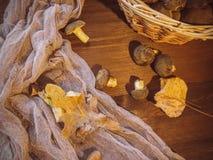Il fondo di legno ed ha selezionato di recente il punto di vista superiore dei funghi polacchi dei funghi sul canestro di legno d fotografie stock libere da diritti