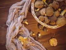 Il fondo di legno ed ha selezionato di recente il punto di vista superiore dei funghi polacchi dei funghi sul canestro di legno d fotografia stock