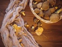 Il fondo di legno ed ha selezionato di recente il punto di vista superiore dei funghi polacchi dei funghi sul canestro di legno d fotografia stock libera da diritti