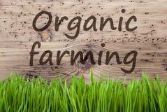 Il fondo di legno luminoso, Gras, manda un sms all'agricoltura biologica Immagine Stock