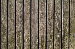 Il fondo di legno di struttura si è rannicchiato con differenti tipi di licheni a Immagini Stock Libere da Diritti