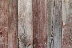 Il fondo di legno di struttura si è rannicchiato con differenti tipi di licheni a Fotografia Stock Libera da Diritti