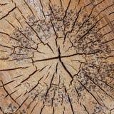 Il fondo incrinato di legno molti un poco ha dormito base di superficie stagionata del primo piano del pino vecchia naturale immagini stock libere da diritti