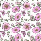 Il fondo senza cuciture della piccola rosa canina selvatica fiorisce con stile di boho del modello dei germogli Fotografie Stock