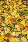 Il fondo stagionale di autunno dell'arancia luminosa va sulla terra Autumn Landscape fotografie stock