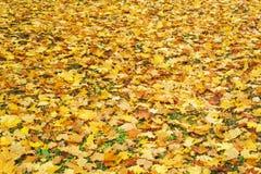Il fondo stagionale di autunno dell'arancia luminosa va sulla terra Autumn Landscape fotografia stock libera da diritti