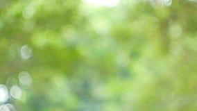 Il fondo verde dell'estratto della natura dal vento della foglia soffia in foresta, bokeh verde dal fondo del fuoco dalla foresta video d archivio
