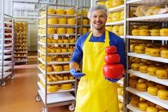 Il formaggiaio bello sta controllando i formaggi nel suo stoccaggio dell'officina Fotografie Stock