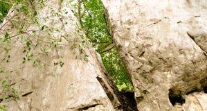 Il foro nella pietra incrinata attraverso l'albero visibile Fotografie Stock