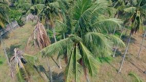 Il forte vento scuote le palme verdi tropicali che crescono nel giardino stock footage