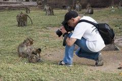 Il fotografo spara le scimmie immagini stock libere da diritti
