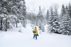 Il fotografo sta camminando nella foresta dell'inverno fotografia stock libera da diritti